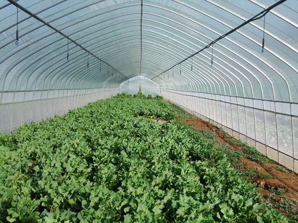 春秋蔬菜拱棚