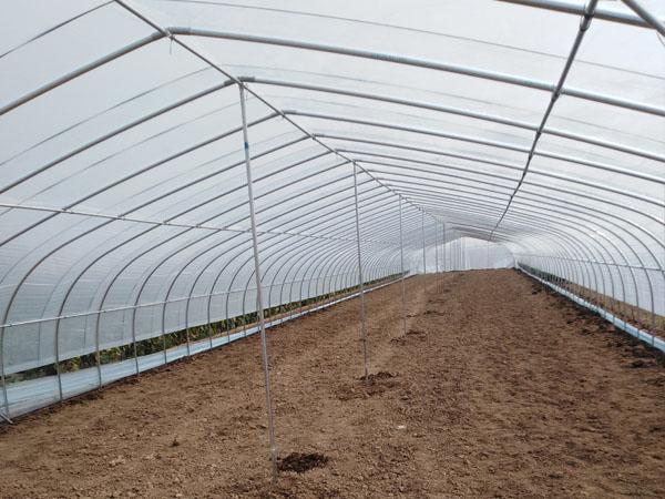 蔬菜养殖大棚
